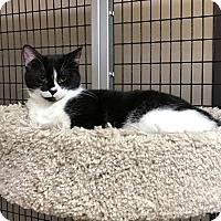 Adopt A Pet :: Maggie - Stockton, CA