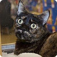 Adopt A Pet :: Reeses - Irvine, CA