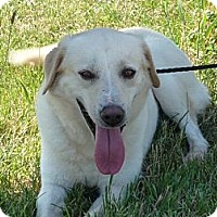 Adopt A Pet :: # 180-12 - ADOPTED! - Zanesville, OH