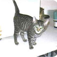 Adopt A Pet :: Miranda - Lake Charles, LA