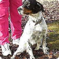 Adopt A Pet :: Sammy - Brattleboro, VT