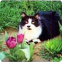 Adopt A Pet :: Ollie - Brea, CA