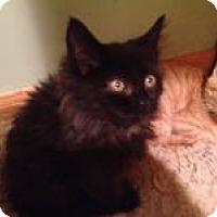 Adopt A Pet :: Tuna - East Hanover, NJ