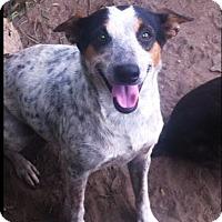 Adopt A Pet :: Sasha - Bogalusa, LA