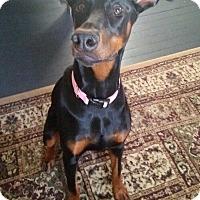 Adopt A Pet :: Sady - New Richmond, OH