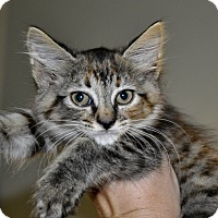 Adopt A Pet :: MEGA - New Smyrna Beach, FL