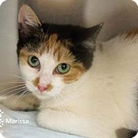 Adopt A Pet :: Marissa - Merrifield, VA