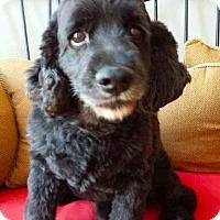 Adopt A Pet :: Fonzie - Flushing, NY