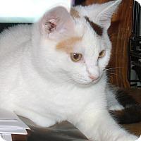Adopt A Pet :: MILLIE - Acme, PA