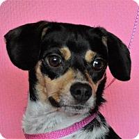 Adopt A Pet :: **JACKIE** MEET FEB 13TH! - Mukwonago, WI