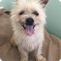 Adopt A Pet :: Herbie - Costa Mesa, CA