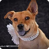 Adopt A Pet :: Betsy - Miami, FL
