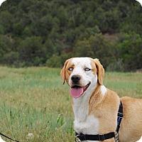 Adopt A Pet :: Butterscotch - Ridgway, CO