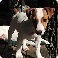 Adopt A Pet :: Danny (VA) - Virginia Beach, VA