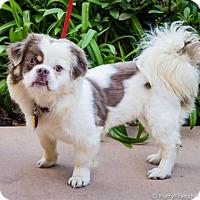 Adopt A Pet :: Aly D5655 - Fremont, CA