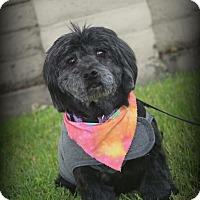 Adopt A Pet :: Bradley - Lodi, CA