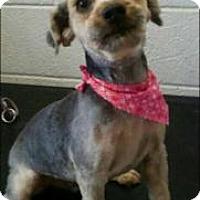 Adopt A Pet :: Smokie - Weatherford, OK