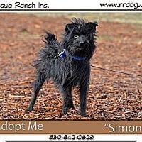 Adopt A Pet :: Simon - Yreka, CA