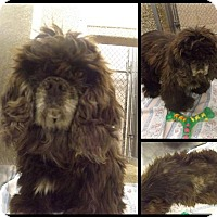 Adopt A Pet :: Sissy - Martinsburg, WV