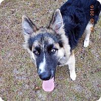 Adopt A Pet :: Colt - Mobile, AL
