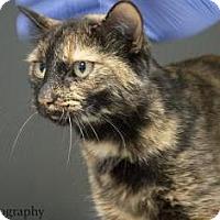 Adopt A Pet :: Squirt - Lincolnton, NC