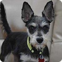 Adopt A Pet :: Miko - Boston, MA