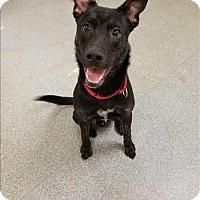 Adopt A Pet :: Stark - Delaware, OH
