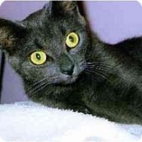 Adopt A Pet :: Eve - Medway, MA