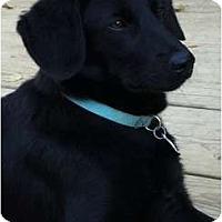 Adopt A Pet :: Duncan - Hagerstown, MD