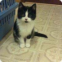Adopt A Pet :: Charlie - Douglas, ON