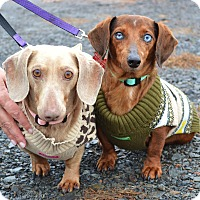 Adopt A Pet :: *Ryder & Winnie - PENDING - Westport, CT
