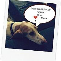Adopt A Pet :: Minnie - Northport, AL