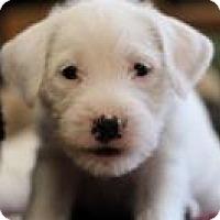 Adopt A Pet :: Doogie - Minneapolis, MN