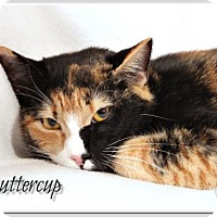 Adopt A Pet :: Buttercup - Atlanta, GA