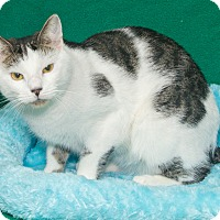 Adopt A Pet :: Falcore - Elmwood Park, NJ