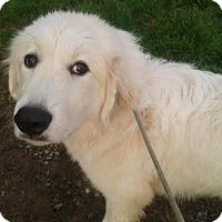 Adopt A Pet :: Mistletoe - Augusta County, VA