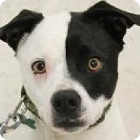 Adopt A Pet :: Spencer - Lexington, KY