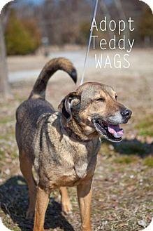 German Shepherd Dog/Shepherd (Unknown Type) Mix Dog for adoption in Wagoner, Oklahoma - Teddy