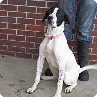 Adopt A Pet :: Jessa - Germantown, MD