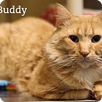 Adopt A Pet :: The Buddy's - Oakville, ON
