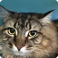 Adopt A Pet :: Marbles - Bellevue, WA
