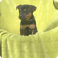 Adopt A Pet :: Tyler - Groton, MA