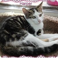 Adopt A Pet :: Harper - Ozark, AL