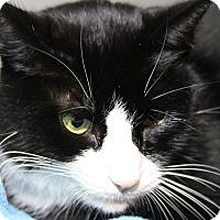 Adopt A Pet :: Winkin - Sarasota, FL