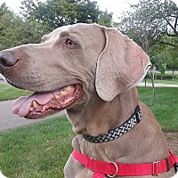 Adopt A Pet :: Milo - Grand Haven, MI