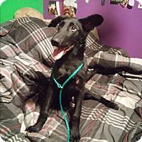 Adopt A Pet :: Bosley - Louisville, KY