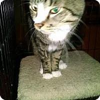 Adopt A Pet :: Thomas - Bridgeton, MO