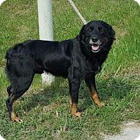 Adopt A Pet :: Bo - Mt. Vernon, IL