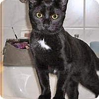 Adopt A Pet :: MEOW - Houston, TX