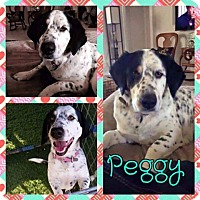 Adopt A Pet :: Peggy - New Milford, CT